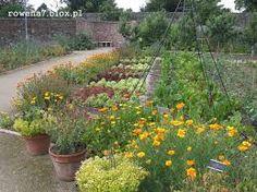 warzywniak w ogrodzie - gdzieś w rogu chcę mieć