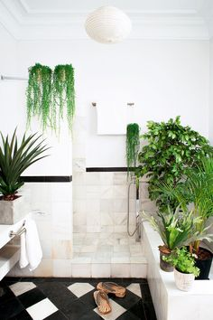 A beautifully designed and decorated bathroom filled with house plants and indoor plants. Botanical design with maximum foliage.