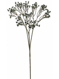 """Baby's Breath in Blue 