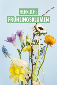 """So wie jede Jahreszeit hat auch der Frühling seinen ganz eigenen Charakter. Er ist wie keine andere Saison ein Sinnbild des erwachenden Lebens: Bäume, Pflanzen, Vögel, Menschen – wir alle genießen die Rückkehr des Lichts und die damit verbundenen """"Frühlingsgefühle"""". Auch bei den Blumen gibt es ganz bestimmte Frühlingsboten wie die Tulpe oder die Narzisse, die uns allen ein Begriff sind. Wir stellen weitere Lieblinge der Saison vor. Wicken, Amsterdam Houses, Spring Starts, Seasonal Flowers, Elegant Flowers, Unique Cards, Shades Of Yellow, Daffodils, Dried Flowers"""