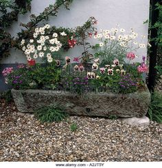 Stone Garden Planters And Troughs English garden landscape victorian wrought iron garden gates close up of stone trough planted with violas and white daisies stock image workwithnaturefo