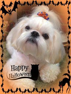 "Halloween 2013 ""Kupcake"""