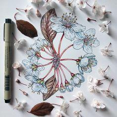 Flowers in Progress: Scientific Illustrator Taunts Us with Spring illustration flowers