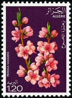 Stamp: Peach (Algeria) (Flowering trees) Mi:DZ 719,Sn:DZ 608,Yt:DZ 680