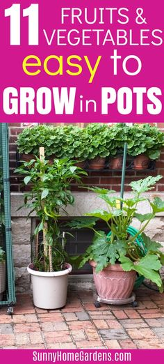 Best fruits and vegetables to grow in pots and containers. If you don't have a large yard, try growing these easy to grow fruits and vegetables in pots or containers on your patio or other small spaces. Growing Vegetables In Containers, Container Gardening Vegetables, Planting Vegetables, Fruits And Vegetables, Citrus Fruits, Growing Veggies, Vegetable Gardening, Fruit Garden, Garden Trees