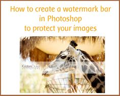 Kristen Duke explains how to create a watermark bar in photoshop.  Have got to learn this!