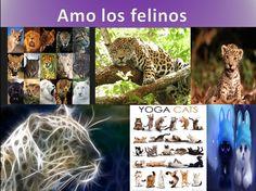 Gatos, cats, felines, felinos, felinos salvajes, gatos domésticos, naturaleza, nature, wild cats