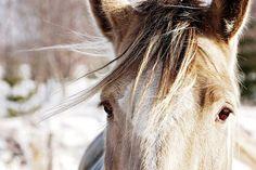 Лошадь, Животных, Ферма