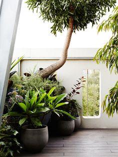 Owen Harris — The Design Files | Australia's most popular design blog.