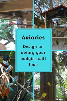 If you are planning an aviary for your budgie, here are a few things you need to consider. Parakeet Care, Fancy Parakeet, Monk Parakeet, Budgie Parakeet, How To Buil, Pet Bird Cage, Bird House Kits, Bird Aviary, How To Attract Birds