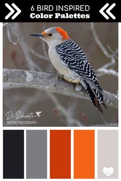 natur videos Beautiful color palettes inspired by nature! Pretty birds are a great place to look for color inspiration. Images by Di Schwartz Nature Photography Color Schemes Colour Palettes, Nature Color Palette, Colour Pallette, Color Palate, Color Trends, Color Combos, Color Psychology, Psychology Facts, Colour Board