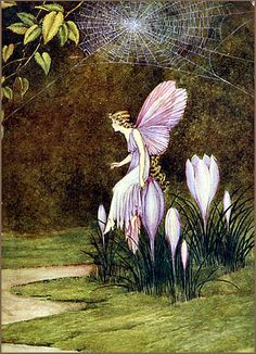 Crocus Fairy
