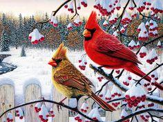 cardinals birds winter cardinals