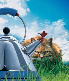 The Alessi Cat ; Bollitore 9093 di Alessi - Design Michael Graves #icona #design