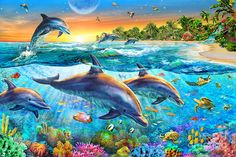 Dolphin Bay by Adrian Chesterman