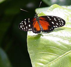 Beautiful Butterflies  http://stores.ebay.com/crazy-weekly-discounts