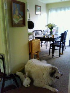 Best Guard Dogs, Animals, Animales, Animaux, Animal, Animais