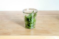 how to make essential oil from fresh mint