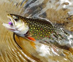 Photo of the Day: A Kaleidoscope of Color - Orvis News Just love fishing.fishing is my passion Trout Fishing Tips, Fishing Kit, Pike Fishing, Kayak Fishing, Fishing Stuff, Fishing Tricks, Walleye Fishing, Fishing Guide, Going Fishing