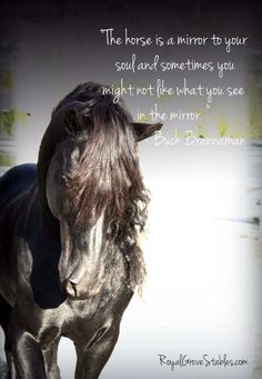 Facebook Horse Quotes | All images are copywrite by Royal Grove Stables. )