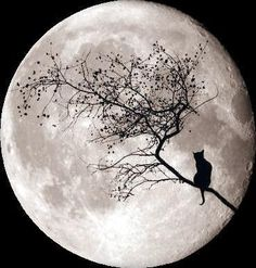 Cat in a tree under a full moon