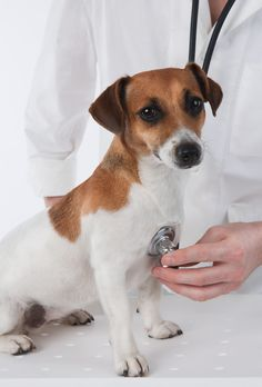 Pet hate the vet? Read these 14 tips to make vet visits fun for both you and your pet!