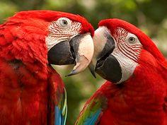 A más cerebro, menos estrés... al menos así ocurre en las aves: http://www.muyinteresante.es/naturaleza/articulo/a-mas-cerebro-menos-estres-411379420114