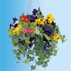Latest Free of Charge winter Hanging Baskets Strategies Hanging baskets are usually a perfect way to make coloration as well as episode to a sunny retaining wall and . Winter Plants, Winter Flowers, Winter Garden, Summer Flowers, Winter Porch, Winter Hanging Baskets, Plants For Hanging Baskets, Hanging Flowers, Floating Flowers