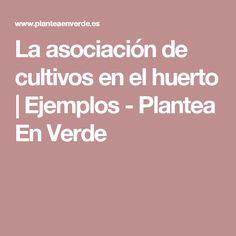 La asociación de cultivos en el huerto   Ejemplos - Plantea En Verde