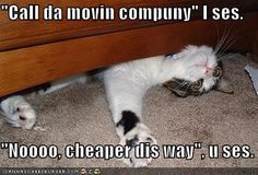 Page 2 of 3009 - World's largest collection of cat memes and other animals Funny Cat Memes, Funny Cat Videos, Funny Cat Pictures, Funny Cats, Funny Animals, Cute Animals, Animal Pictures, Hilarious, Cats Humor