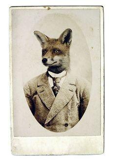 Me presento: soy Mr. Fox, nuevo pretendiente de Ranita, me gusta jugar con ella al escondite .....