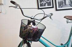 cat gato gato fofo  gatinho filhote