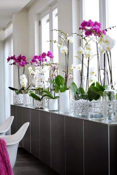 Flores na decoração é sinônimo de elegância, ainda mais se a flor emquestão for a orquídea. Tão graciosa e linda ela tem o poder de deixaradecoração mais requintada.Devido a sua variedade de cores e