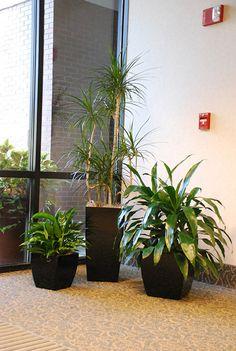 bessere luftqualit t durch pflanzen zimmerpflanzen pflanze und garten ideen. Black Bedroom Furniture Sets. Home Design Ideas
