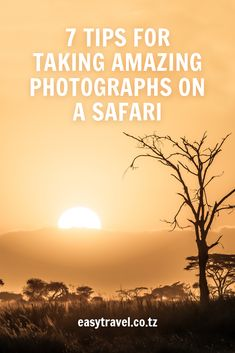 Magnificent landscapes, animal encounters, sunrises and sunsets that are unlike anything you have seen before. 🌅🦒🦁🇹🇿 Some useful tips to capture those moments. Tanzania Safari, Become A Photographer, Sunrises, Helpful Hints, How To Become, Landscapes, In This Moment, Amazing, Tips