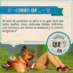 ¡Acaricia más a tu mascota! Los beneficios serán mutuos. Tu Casa Express - #Mascotas #Perros #Gatos