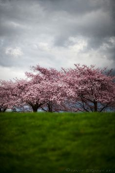 Spring Forward | by Lance Rudge