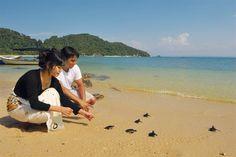 Releasing Turtles, Terengganu