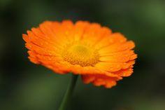 Orange flower, Explore