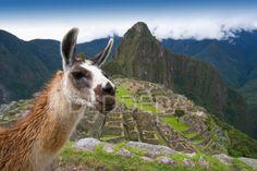 Ancient+Inca+Architecture+And+Llamma   Machu Picchu Peru Llama Landscape   Photography by DEDDEDA