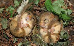 28 Teeny Tiny Wild Mice | Bored Panda