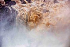 Vencejos de las cataratas (Vencejos of the Falls)