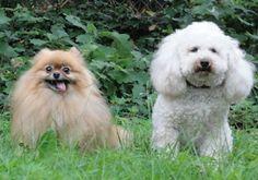 My dogs Abigail & Phebe. Tommy, Winston Salem, NC. 10/29/14.