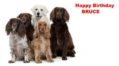 Bruce - Dogs Perros - Happy Birthday