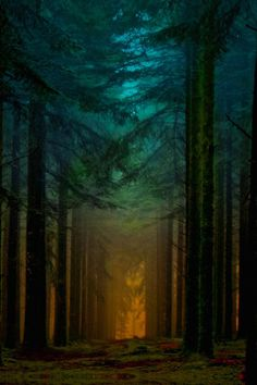 enantiodromija:  Lighted forest! by Patrice Thomas on 500px