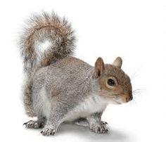 Bildergebnis für squirrels