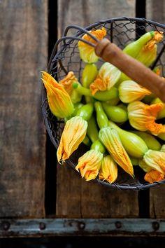 Zuccina with blossom