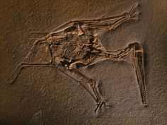 Fossils are the preserved remains, or traces of remains, of ancient animals and plants Dinosaur Bones, Dinosaur Fossils, Reptiles, Pictures Of Fossils, Out Of Place Artifacts, Amber Fossils, Megalodon, Aliens And Ufos, Extinct Animals