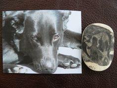 scrimshaw von Gele Schloetmann, Hund