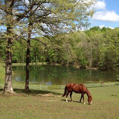 Stroker the Quarter Horse at Serenity North Farm, NC.  I love it here.